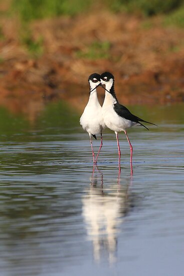 all you need is stilt love by ruth  jolly