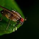 Fly On A Leaf #3 by Kerrod Sulter