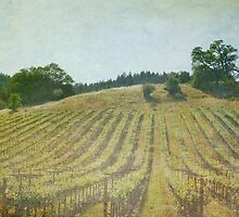 Vineyard by Lynn Starner