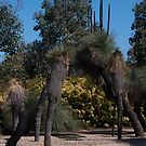 Beautiful trees by Gerard Rotse