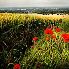 Poppies and Wheat by Andrew Walker