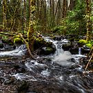 Lets Move Along by Charles & Patricia   Harkins ~ Picture Oregon