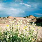 Spring in the Desert by Citisurfer