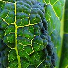 7/365 verdure by LouJay