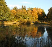 Autumn pond by Gordon1