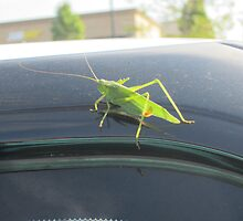 Free ride for Jimminey Cricket by AuntieBarbie