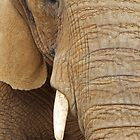 African Elephant by Colin Edwards