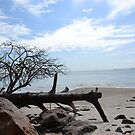 Beach at Tinnanbah by TheaShutterbug