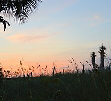 Morning Palm  by ©Dawne M. Dunton