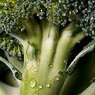 Broccolli 2 by Sheaney