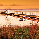 Golden Sunset by Calelli