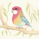 Whimsical Rosella by Catherine Gabriel