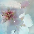spring by Teresa Pople