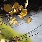 Falling Leaves 2 by Tracey Pearce