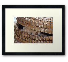 Peek a boo... there you are! Framed Print