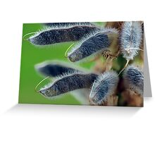 Fuzzy Lupins Greeting Card