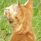 What's the other side of this fence? by TesniJade