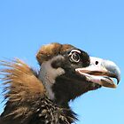 Vulture from Mongolia by Citisurfer