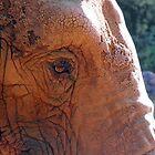 Elephant's Eye by ukphotography