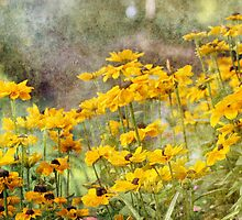Textured Black-Eyed Susans by Astrid Ewing Photography
