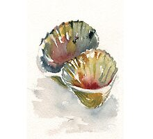 Shell painting i phone case by Dotty  Reiman