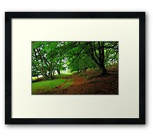 Walking in an ancient forest Framed Print
