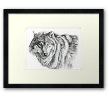 Wolf g2012-031 by schukina Framed Print