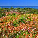West Coast Spring 2012b by croust