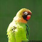 cheeky bird by Steve Shand
