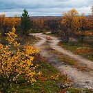 Autumn in lapland by ilpo laurila