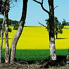 Canola fields Western Australia by Debbie-anne