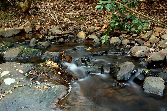 Slow Shutter on the Stream by Vanessa Barklay