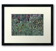 Wild Flowers, West Australia Framed Print