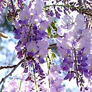 Petals of Wisteria by Gabrielle  Lees