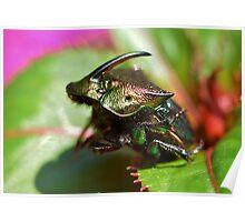 Rainbow Scarab Beetle Poster