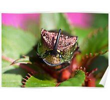 Rainbow Scarab Beetle I Poster