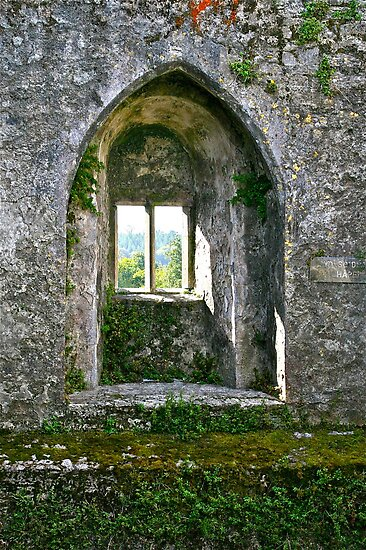 Foliage on Blarney Castle Window, County Cork, Ireland by Mary Fox