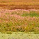 Autumn Marsh Colors by lorilee