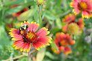 Bee by ©Dawne M. Dunton