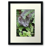 Cat Playing Hide and Seek Framed Print