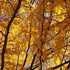 Yellow Locust Canopy by Karen Jayne Yousse