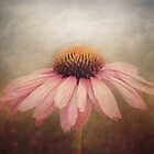 Coneflower in a field of clover by polly470
