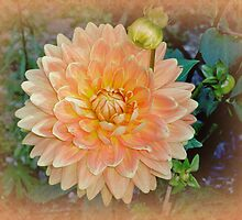 Peachy Keen Dahlia by MotherNature