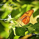 Orange Butterfly by photecstasy