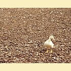 Sitting Duck by Sarah Cowan