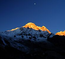 Annapurna South, Himalaya, Nepal. by Andy Newman