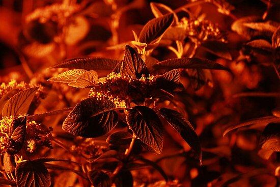 Fire Leaves by Adam Kuehl