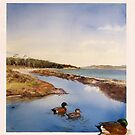 Maria Island painted cliffs and Chestnut teal by melhillswildart
