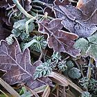 Frosted Leaves by Jacqueline Longhurst