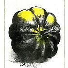 acorn squash pumpkin schoolbook art print I by Veera Pfaffli